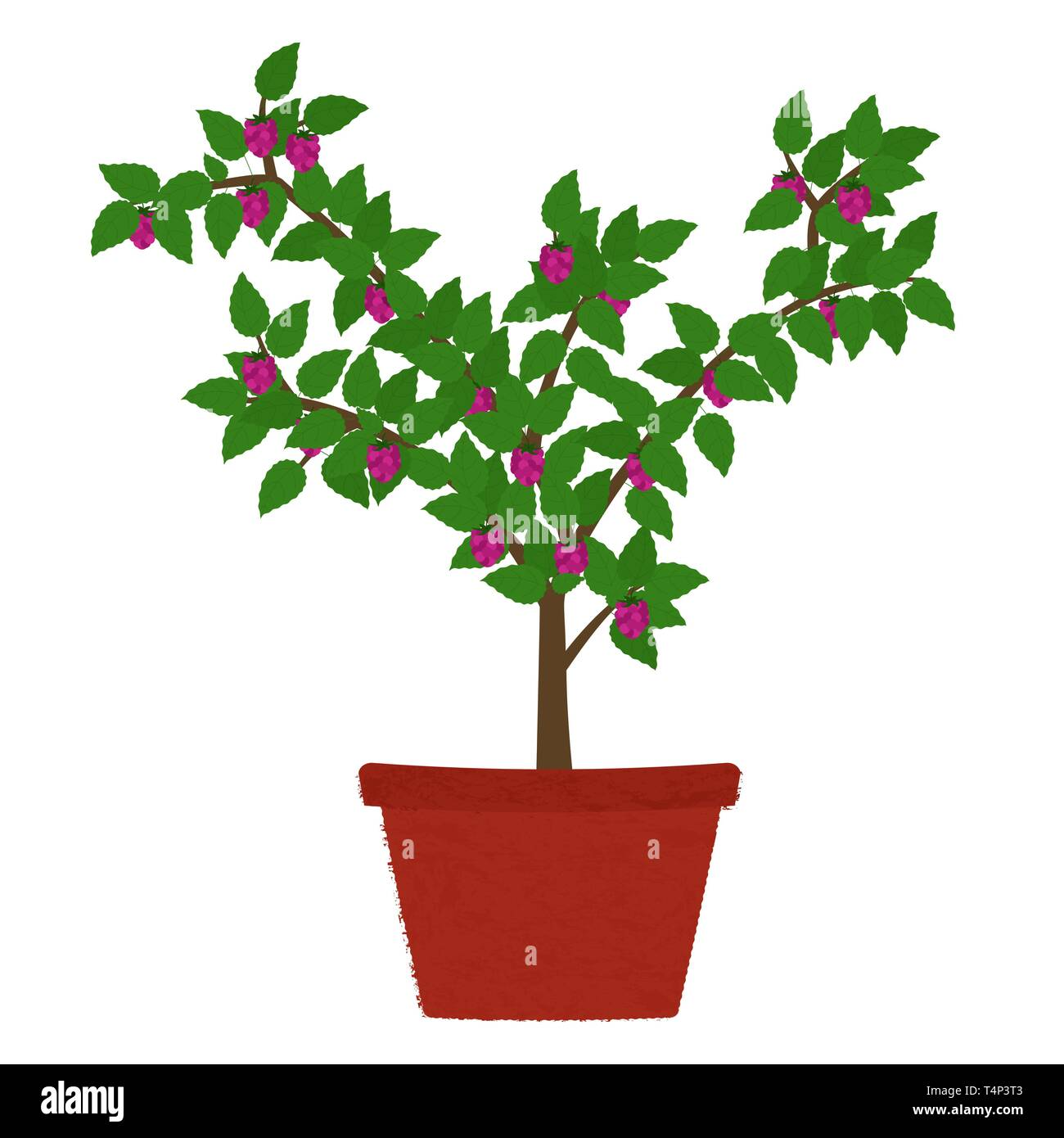 Raspberry fruit tree in clay vase. Isolated. White background. - Stock Vector