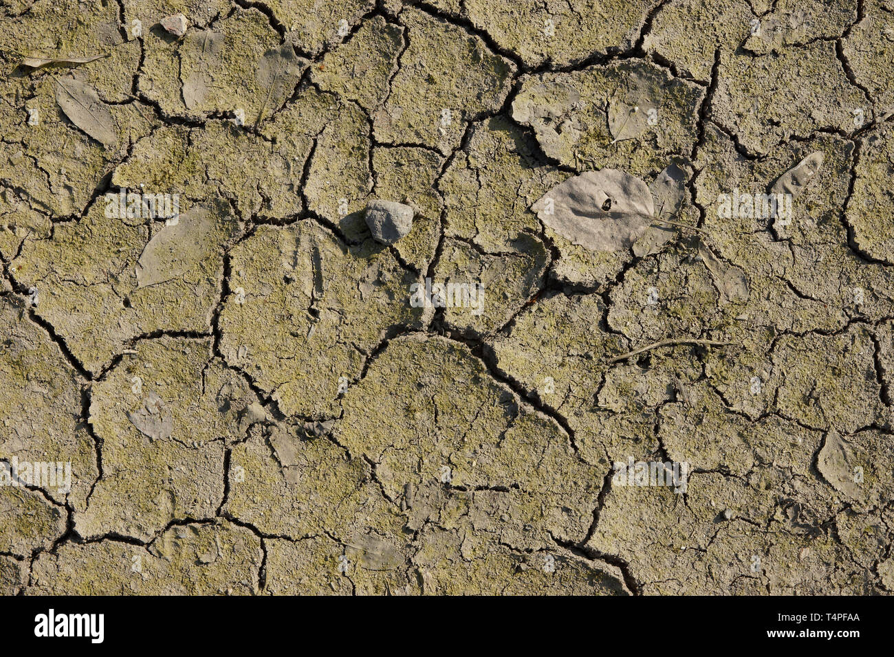 leaves and drying cracks on clay soil - Stock Image