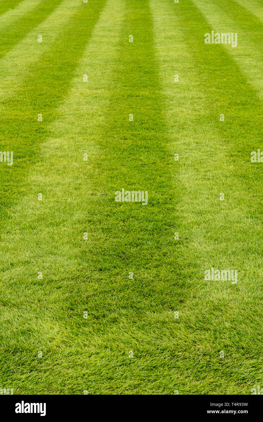 Manicured luxurious lawn freshly mowed with straight stripes - Stock Image
