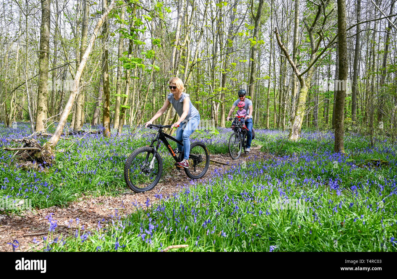 Brighton, UK. 18th Apr, 2019. The Meeker family enjoy a cycle ride on a warm sunny day through Stanmer Park in Brighton which is carpeted in bluebells as the weather is forecast to be warm and sunny over the Easter weekend with temperatures expected to reach over twenty degrees in some parts of the South East Credit: Simon Dack/Alamy Live News Stock Photo