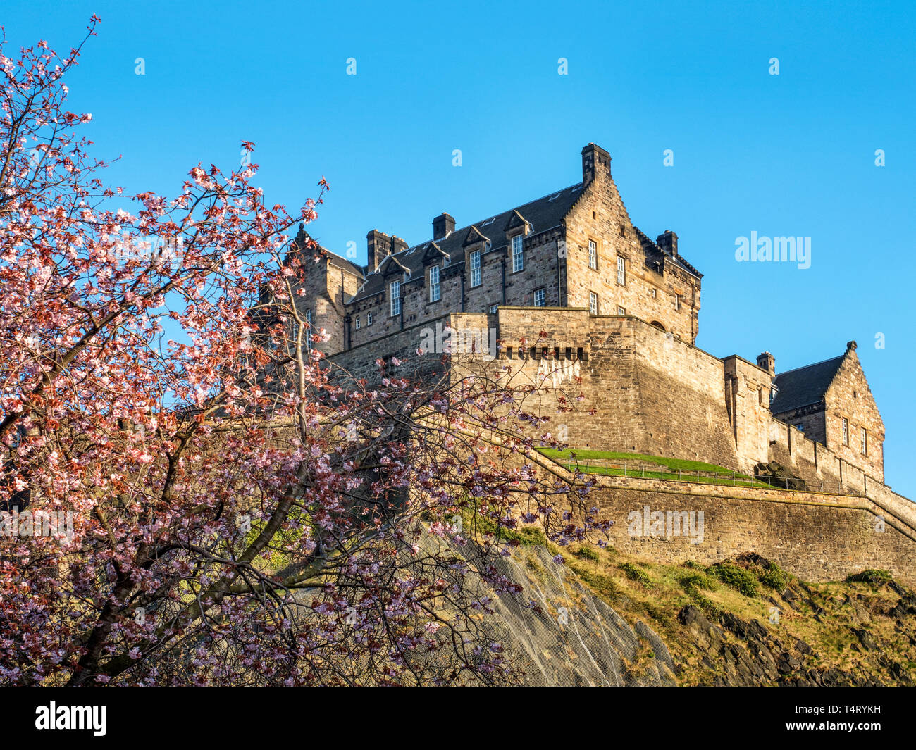 Spring blossom and Edinburgh Castle from West Princes Street Gardens Edinburgh Scotland - Stock Image