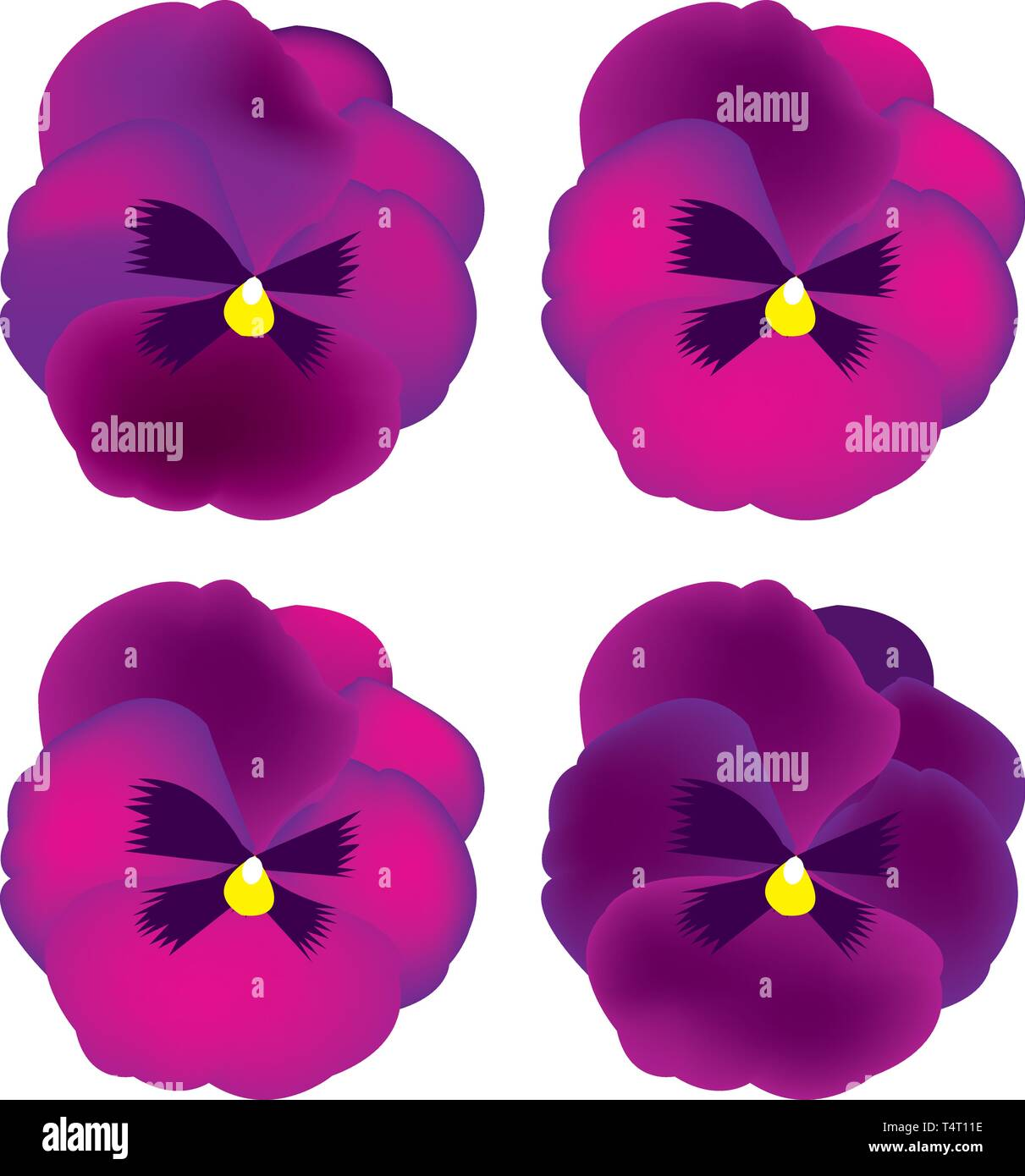 pansy flowers Stock Vector