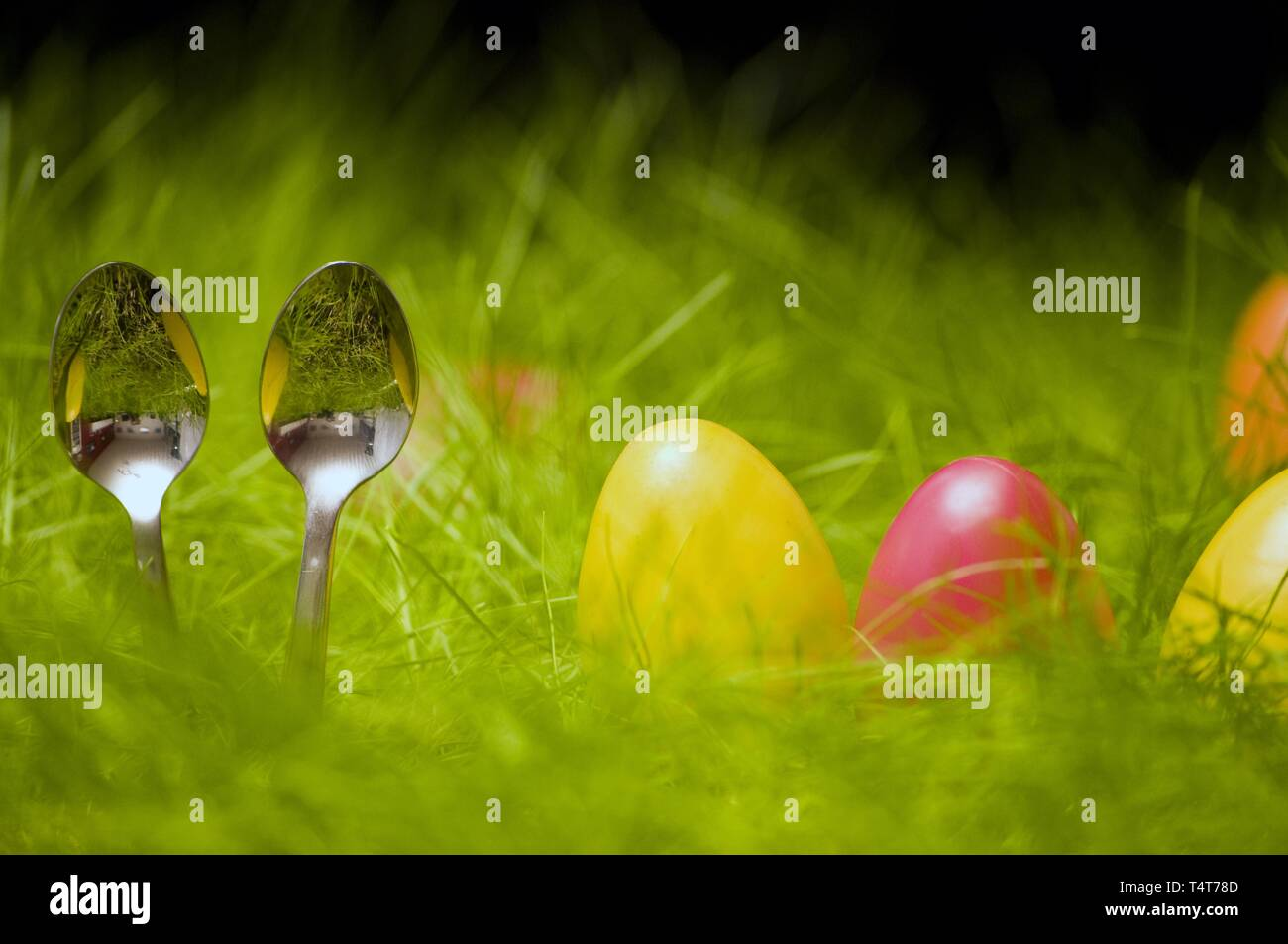 Easter eggs in grass, coffee spoon, symbol photo Osterhase - Stock Image