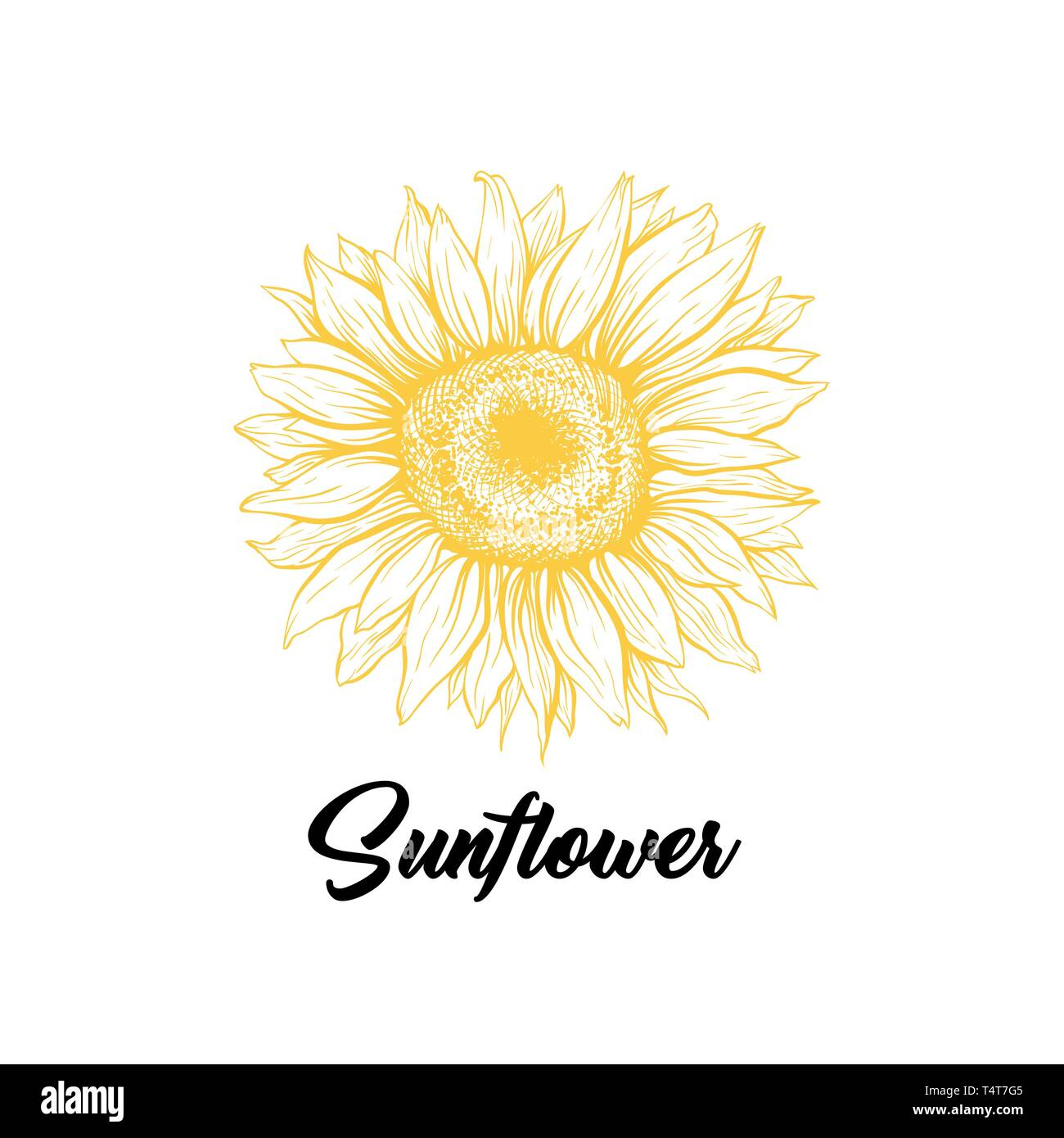 Sunflower Yellow Blooming Sketch Illustration Summer Flower With Black Calligraphy Helianthus Outline Logo Drawing Floral Botanical Isolated Clipart Eco Farming Logotype Design Vector Idea Stock Vector Image Art Alamy