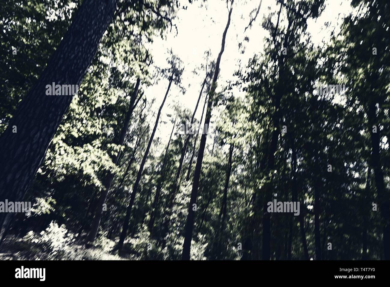 Danger in the forest, symbolic image - Stock Image