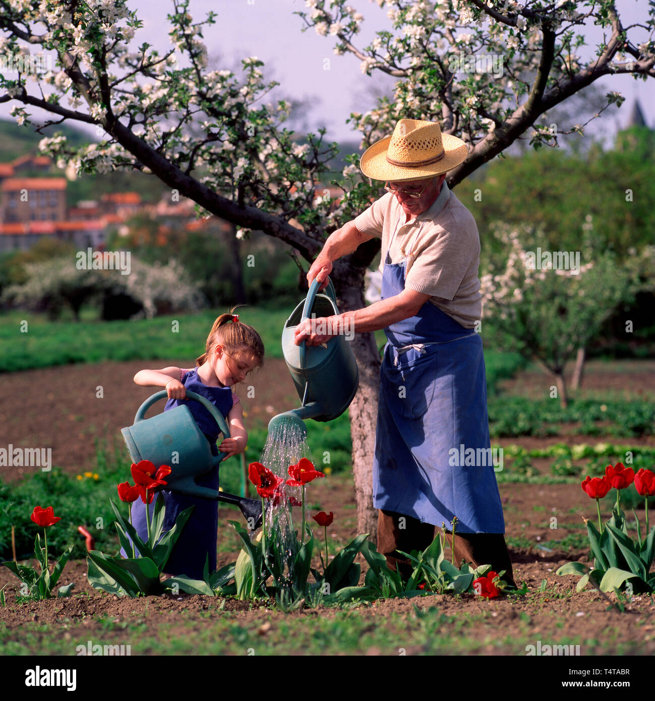 Grandfather and his little daughter watering flowers in the garden - Stock Image