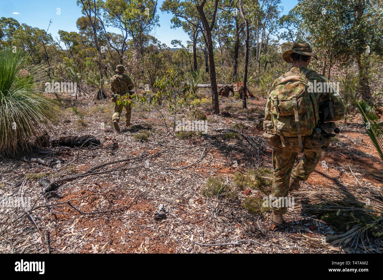 6e9eba7afbd Australian Army reserve soldiers on an exercise in the Australian bush.  They are wearing typical