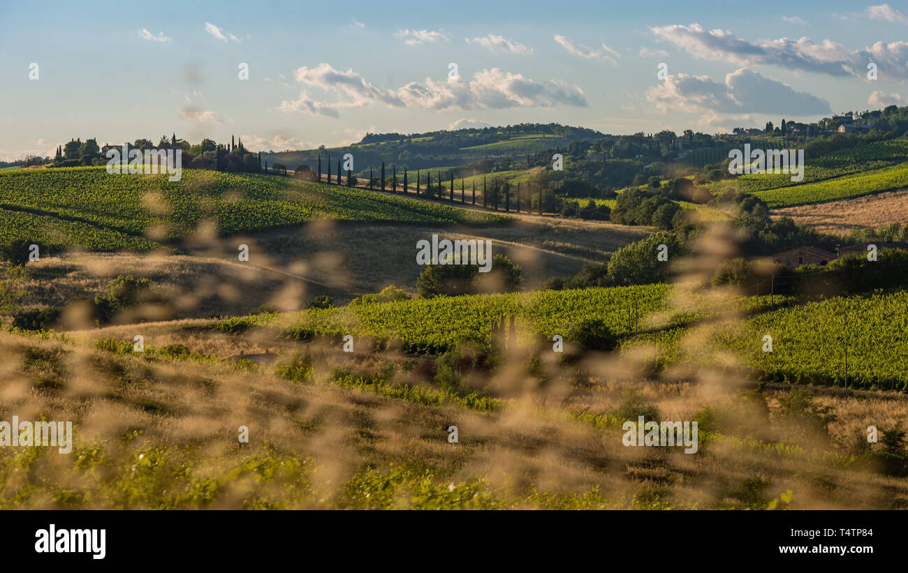 View of Tuscany, in Italy - Stock Image