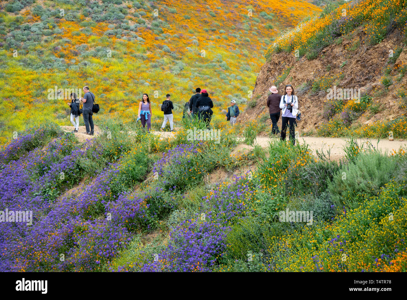 Lake Elsinore, California - March 20, 2019: Happy, smiling photographers and tourists take photos and walk the trail at Walker Canyon, admiring the wi - Stock Image