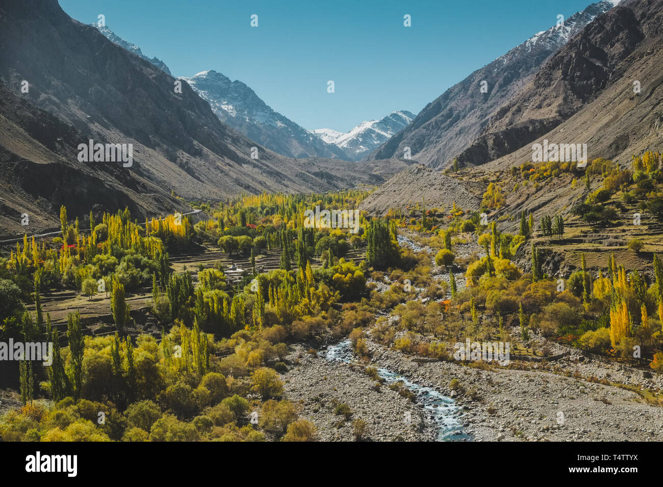 Nature landscape view of yellow and green foliage in autumn with a stream surrounded by mountains in Karakoram range,Skardu. Gilgit Baltistan,Pakistan. - Stock Image