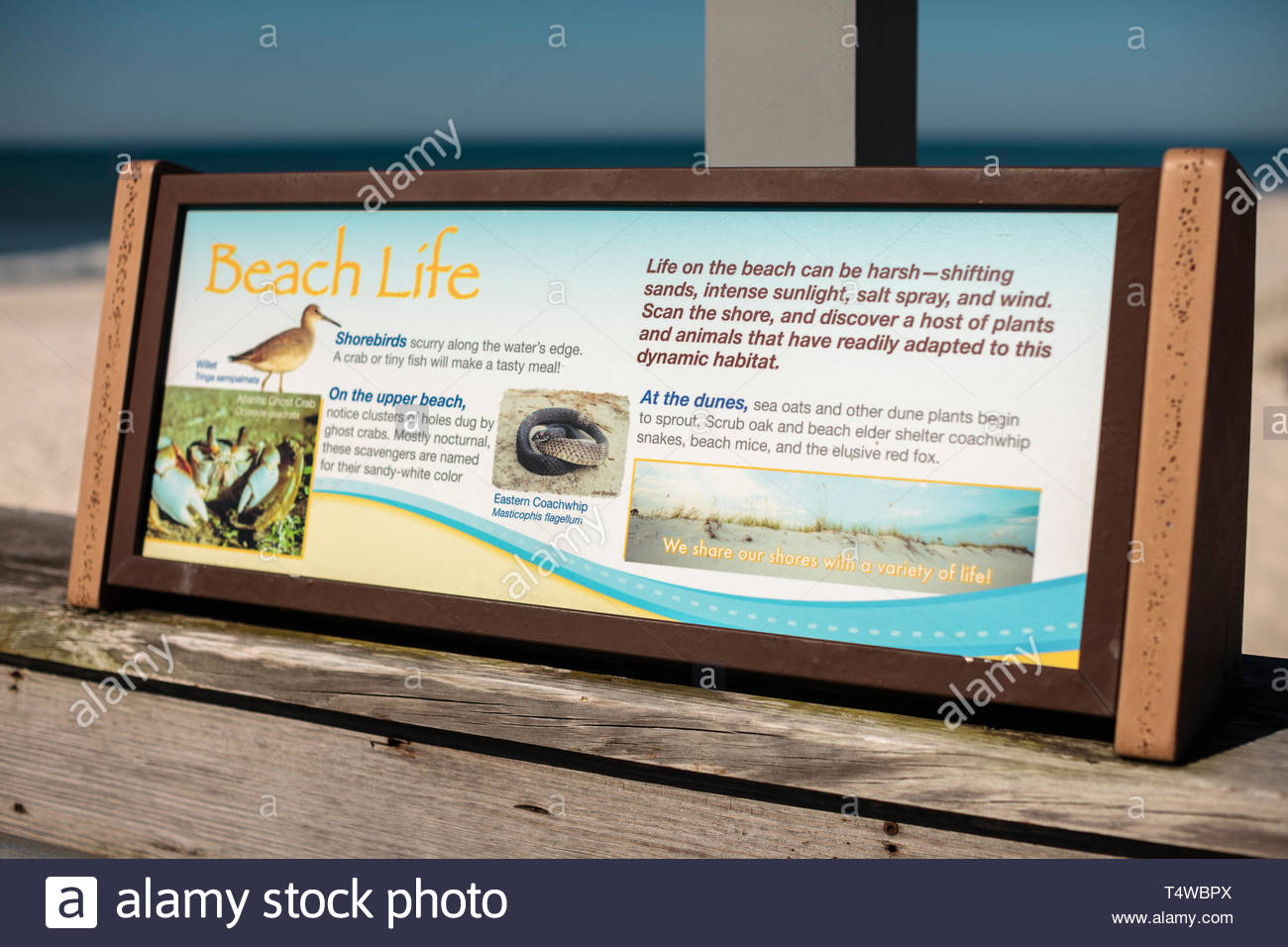 Beach life informational sign along the fishing pier at Gulf State Park, Gulf Shores, Alabama Stock Photo