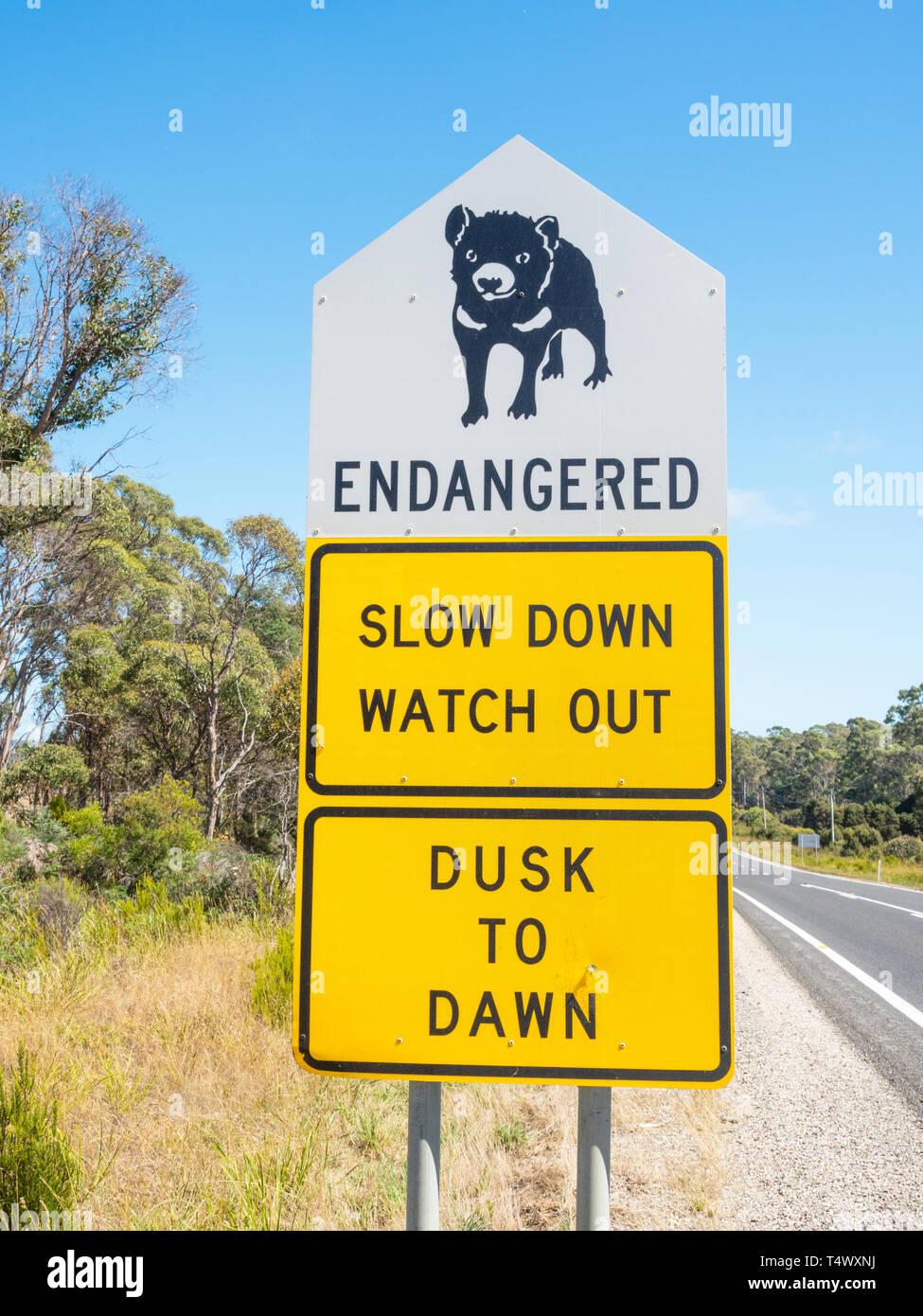 A Tasmanian Devil signboard next to the B82 road in northern Tasmania, Australia. Stock Photo