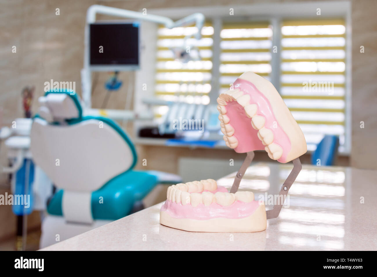 Human jaw models at a dentist office, teeth care and prosthetics concept. Artificial plastic jaw model for demonstrating dental care rules to patients - Stock Image