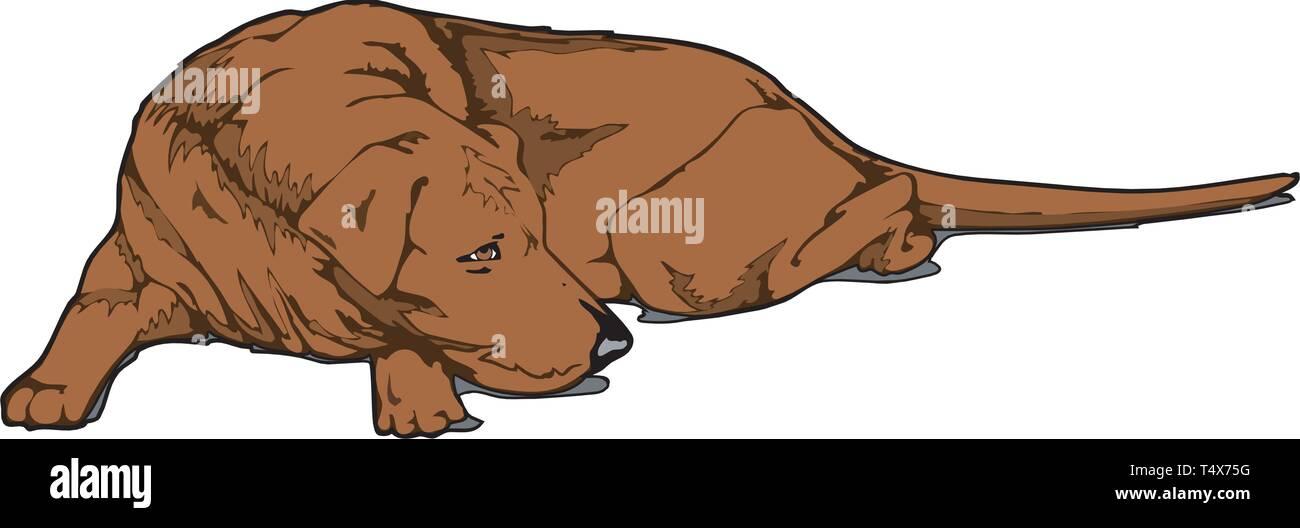 Sleeping Dog Vector Illustration - Stock Vector