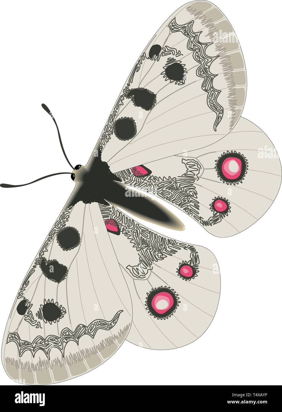 Apollo Butterfly Vector Illustration - Stock Vector