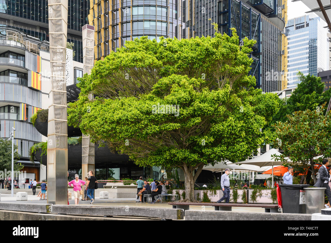 A tree near Darling Harbour Wharf 1, King Street Wharf, Sydney, New South Wales, Australia. Stock Photo