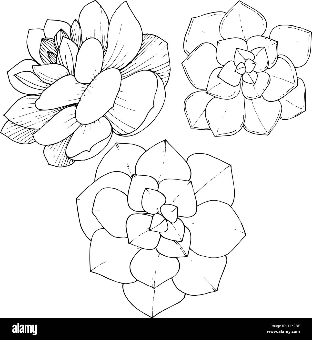 Succulents Black And White Stock Photos Images Alamy