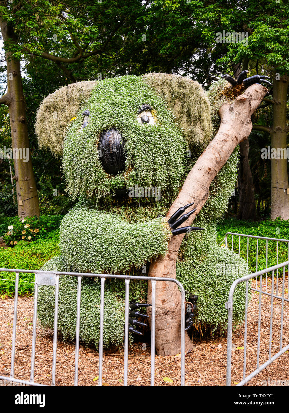Topiary koala bear at The Royal Botanic Garden, 74 acres adjacent to the central business district of Sydney, New South Wales, Australia. Stock Photo