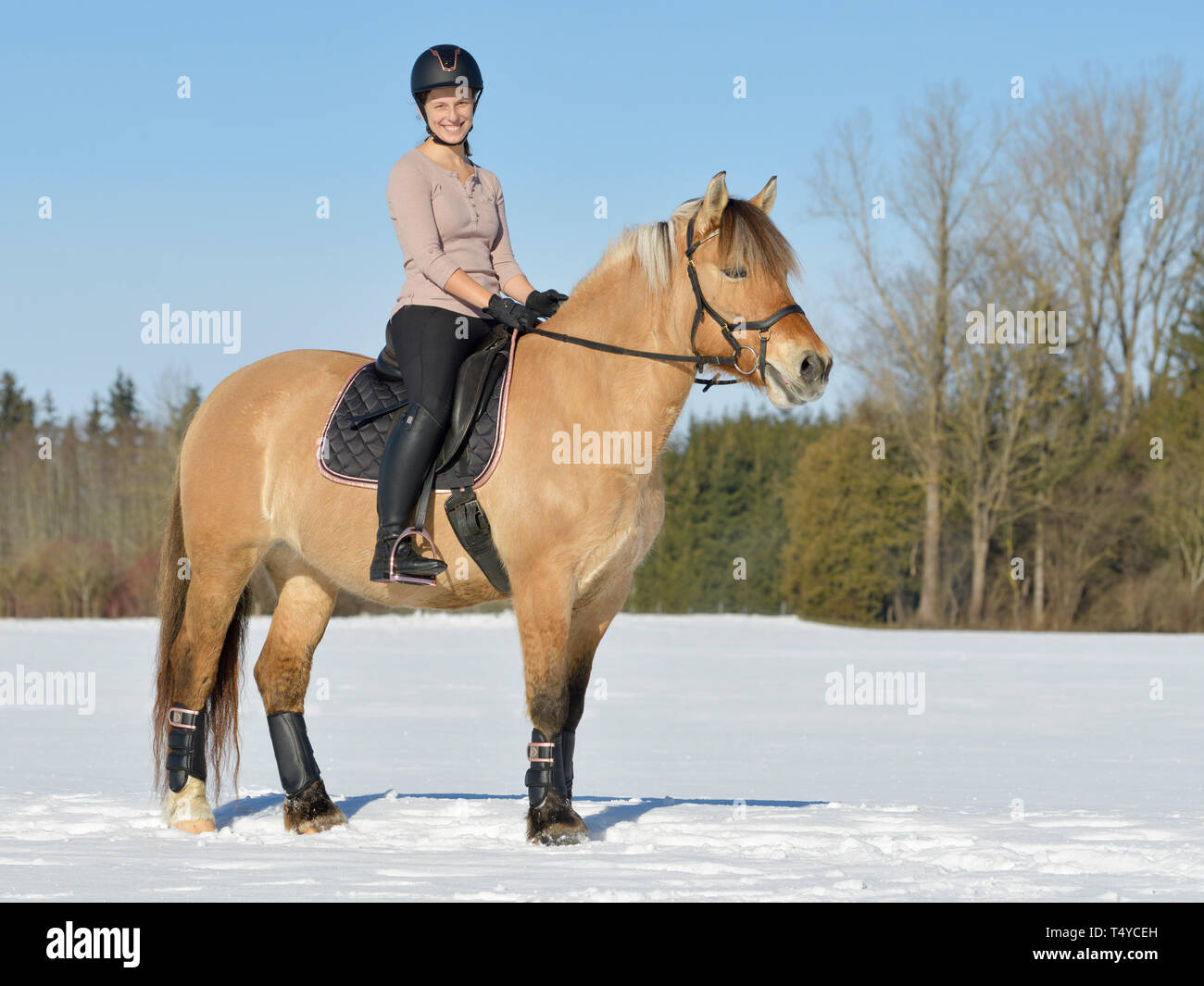 Rider On Back Of A Norwegian Fjord Horse Riding In Snow Outfit In Black And Rose Gold Stock Photo Alamy