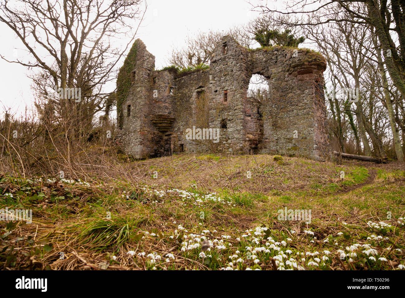 Auldhame Castle is a tower house standing on a ridge above Seacliff beach near North Berwick Scotland - Stock Image