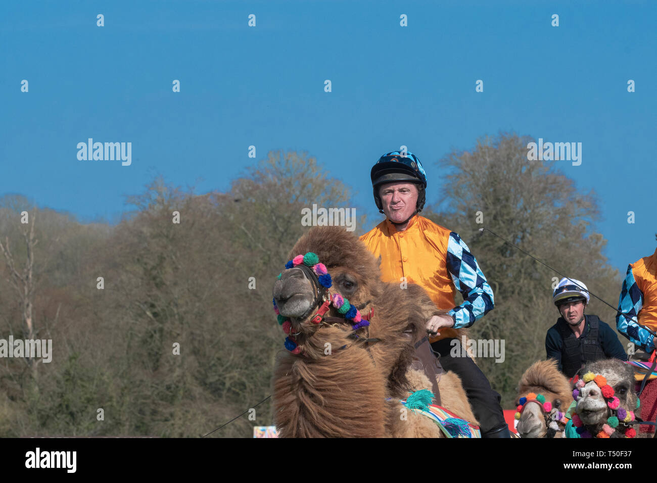 Hungerford, West Berkshire, UK. 19th Apr 2019. Melbourne 10 Racing Camel Racing in the main area thrilling the crowds with AP McCoy (Sir Anthony Peter McCoy OBE, commonly known as AP McCoy ) former champion horse racing jockey taking the the lead and onto win the race over famous horse race trainer Jamie Osborne and Nico de Boinville racing jockey who competes in National Hunt racing. Credit: Gary Blake/Alamy Live News Stock Photo