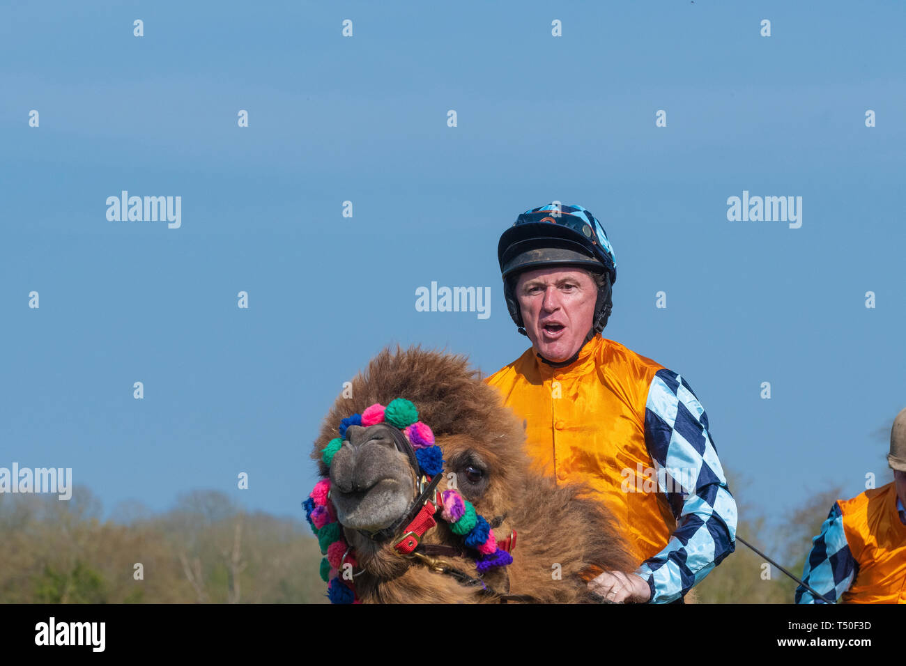 Hungerford, West Berkshire, UK. 19th Apr 2019. Melbourne 10 Racing Camel Racing in the main area thrilling the crowds with AP McCoy (Sir Anthony Peter McCoy OBE, commonly known as AP McCoy ) former champion horse racing jockey taking the the lead and onto win the race over famous horse race trainer Jamie Osborne and Nico de Boinville racing jockey who competes in National Hunt racing. Stock Photo