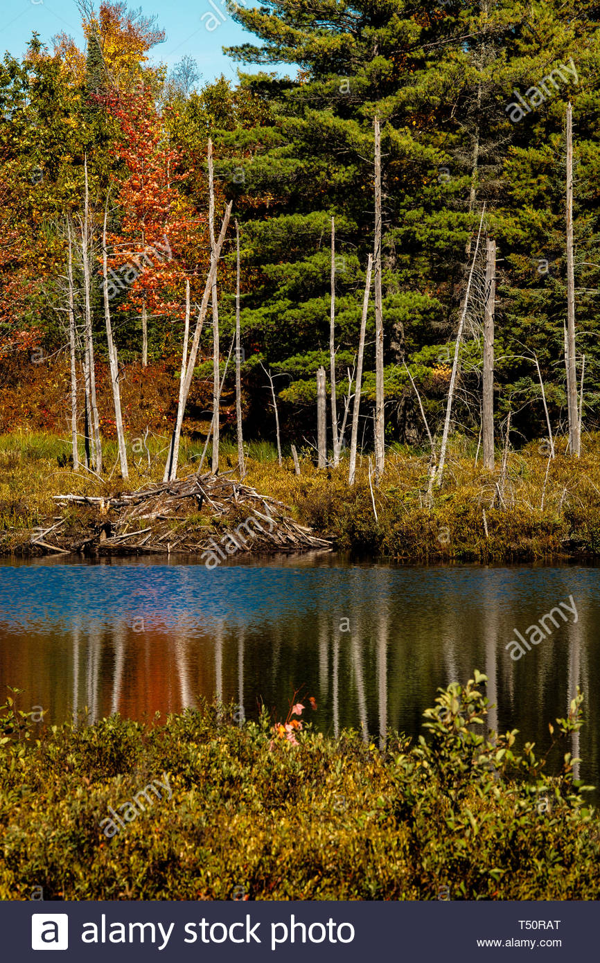 Autumn Colors In Vilas Park Lagoon >> Changing Autumn Colors Reflecting Off The Small Bog Lake In Vilas