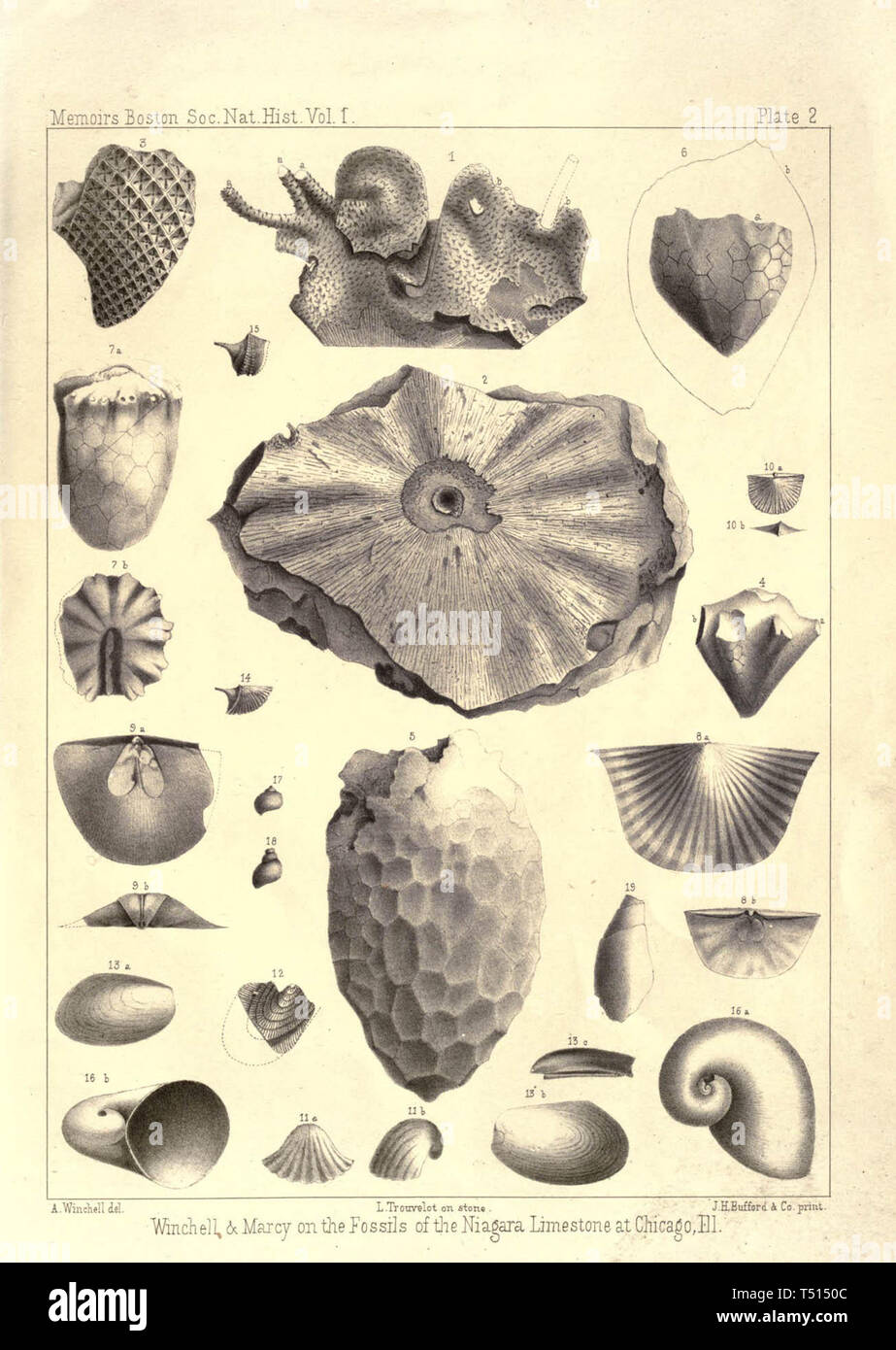 Enumeration of fossils collected in Niagara limestone at Chicago Illinois - Stock Image