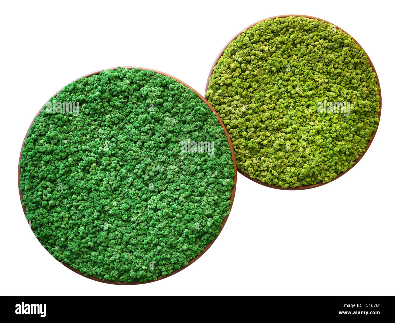 Two Different Examples Of Finland Mosses Types In Overlaying Round