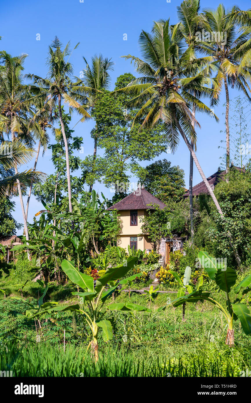 Landscape With Green Palm Tree And A Stone Home On A Sunny