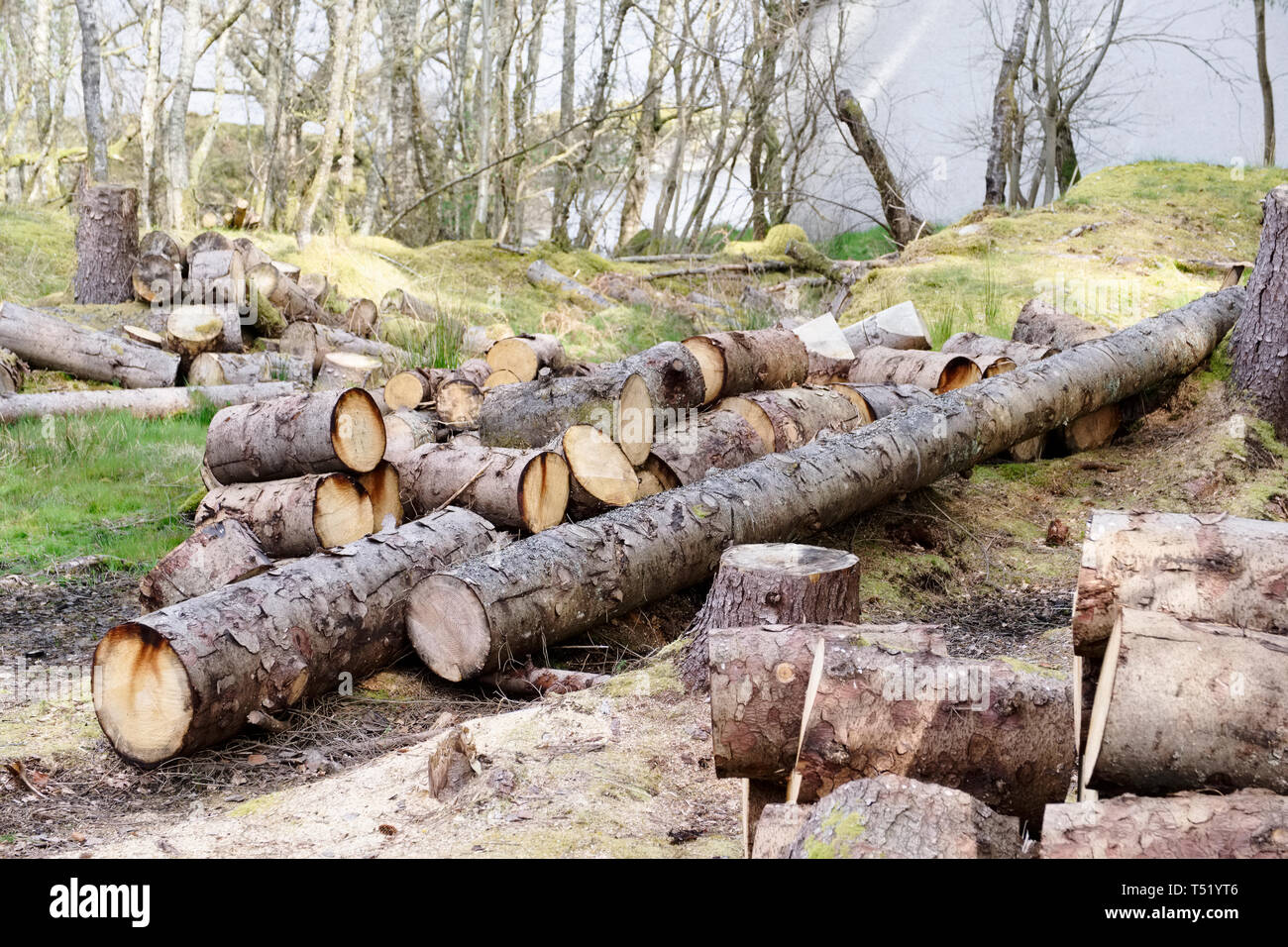 Chopped wood logs for sale use in fire place at home stored on