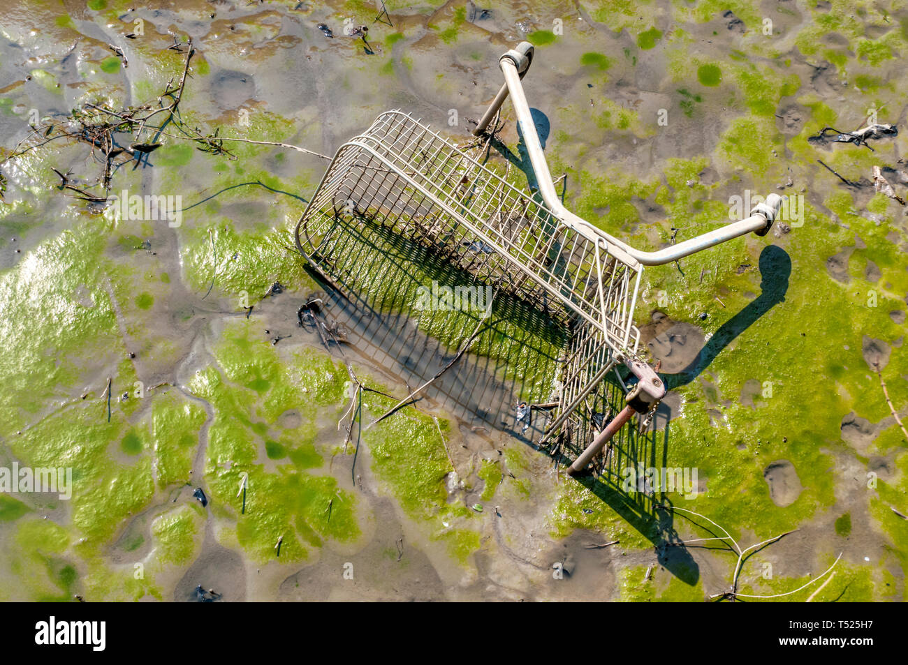 A supermarket trolley sunk in mud in the River Thames at Hammersmith. - Stock Image