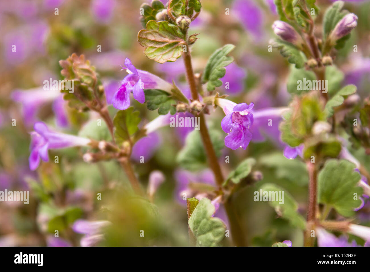 Purple Flowers On A Background Of Green Leaves Tiny Pink Flowers In Spring Pink Flower Stock Photo Alamy,Goodwill Furniture Donation Drop Off
