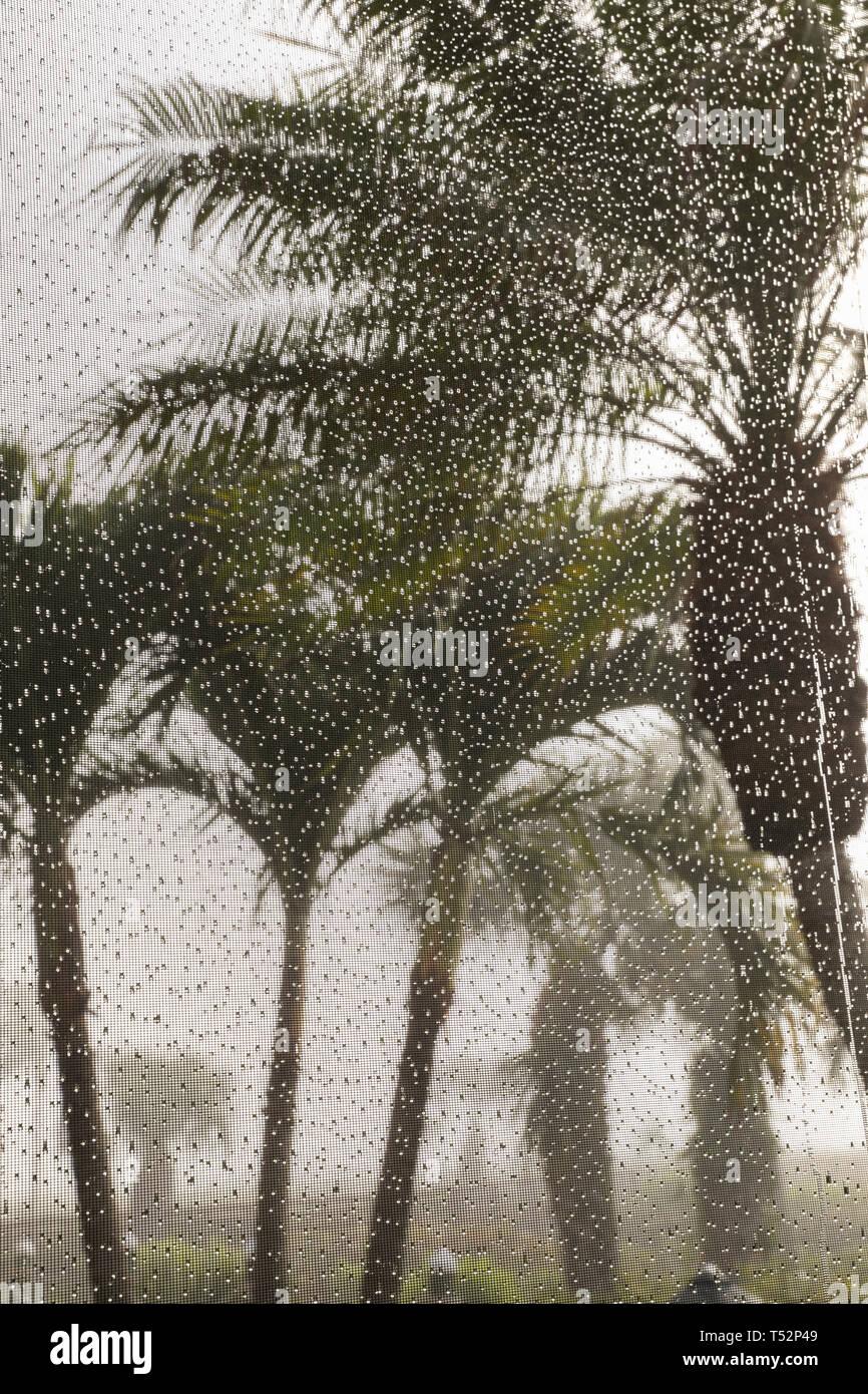 USA, Florida, Sanibel Island, palm trees seen through a screened window with rain drops - Stock Image