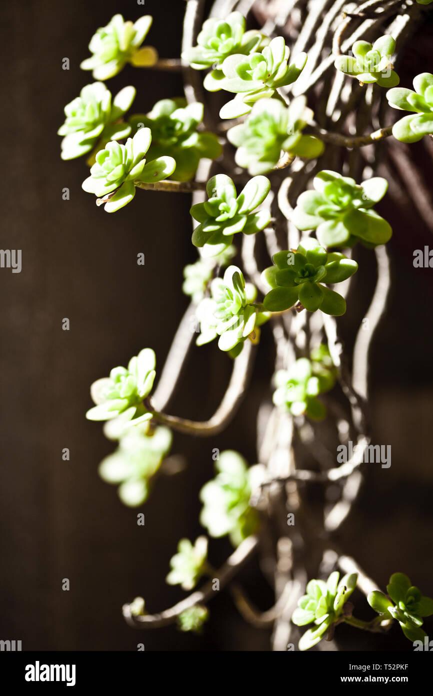 Hanging Succulents Closeup On Brick Wall Background Stock Photo Alamy
