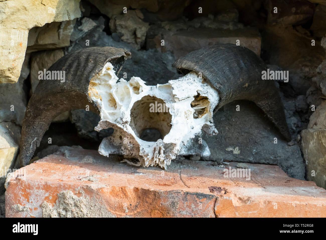 Schädel, skelett einer Ziege, mit großen, gebogenen Hörner, hängt an einer Mauer Stock Photo