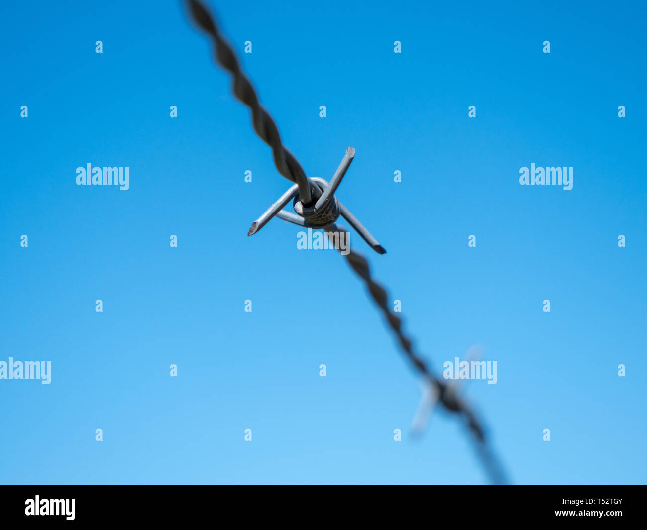 Barbed Wire Isolated on Blue Sky - A Concept for Security, Border Control, Migration Crisis - Stock Image