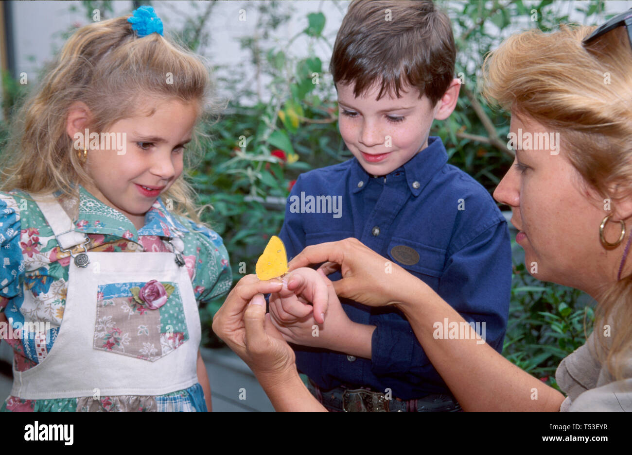 Tampa Florida Museum of Science & Industry hands on scientific exploration young visitors butterfly exhibit Stock Photo