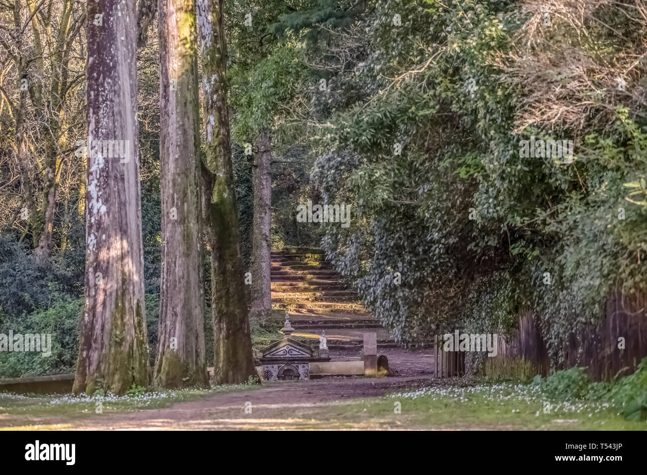 View of forest on Buçaco mountain, with ancient fountain, centenarian trees and pedestrian path and granite staircase in Portugal - Stock Image