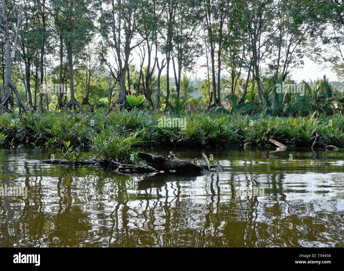 Vegetation in Pulau Ranggu area along Brunei River near Bandar Seri Begawan, Sultanate of Brunei - Stock Image