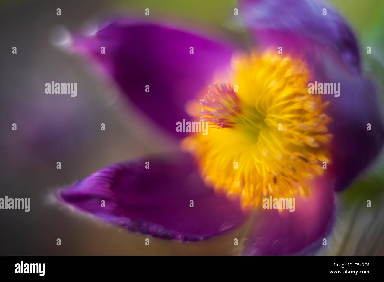 A macro photograph of unknown flower taken with extremely low depth of field at sunset. - Stock Image