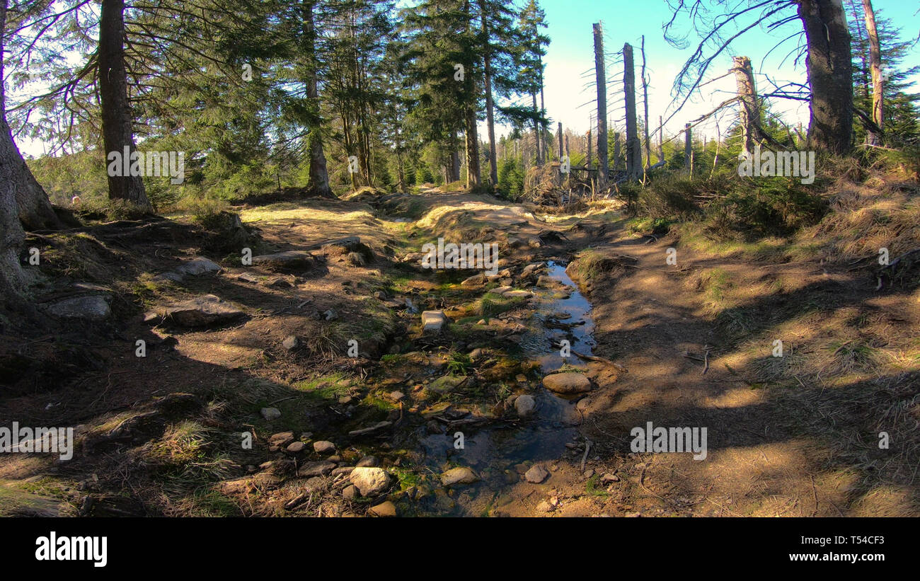 Some water running down sunny coniferous forest of Harz mountains in spring season Germany, wide angle shot - Stock Image