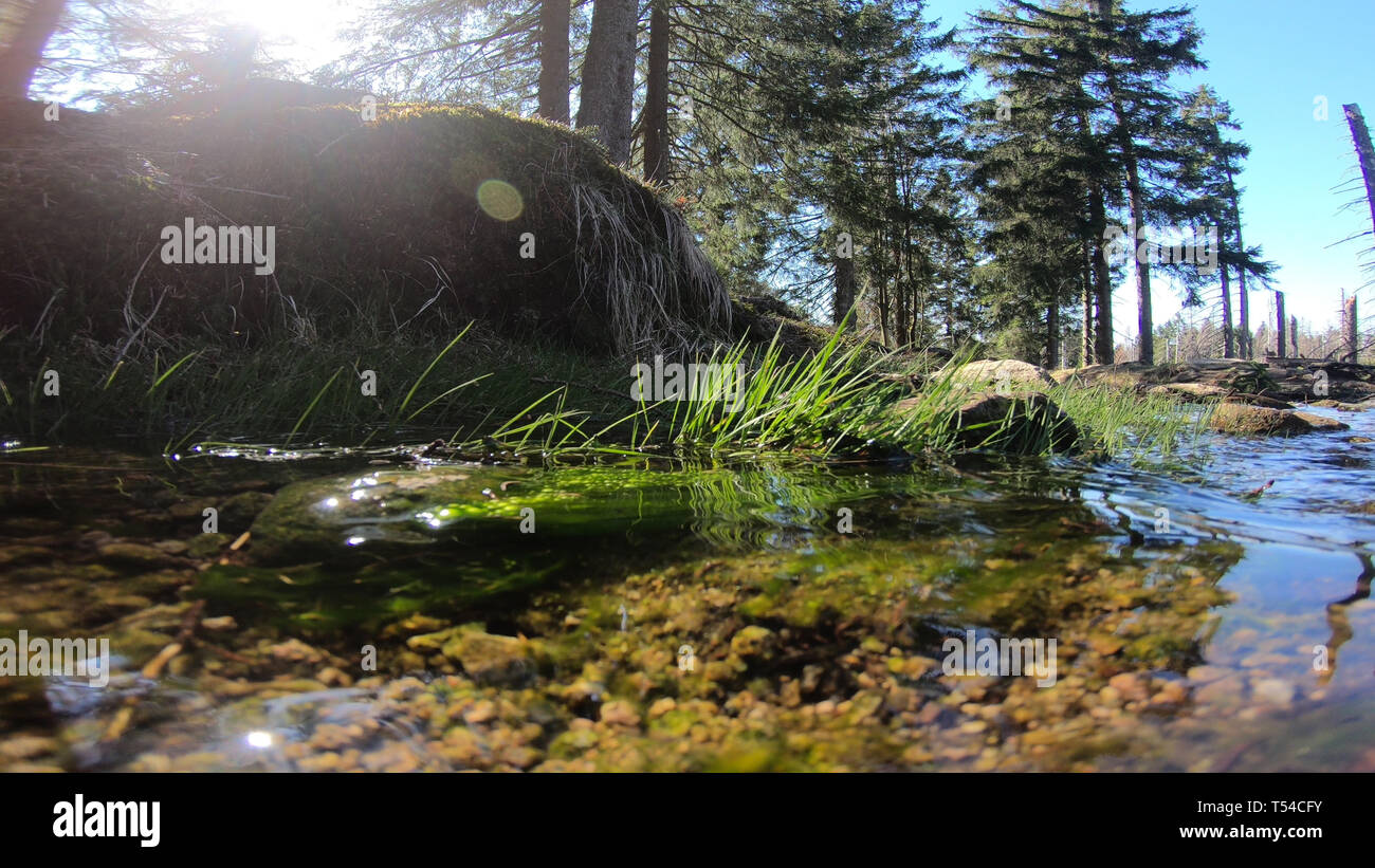 Low angle some water running down sunny coniferous forest of Harz mountains in spring season Germany, wide angle shot - Stock Image