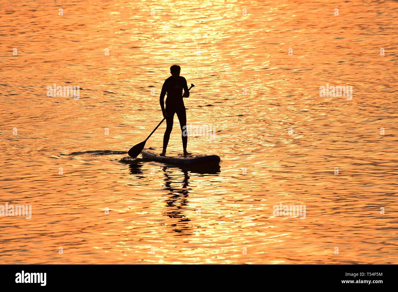 Aberystwyth Ceredigion Wales UK, Easter Saturday 20th April 20th 19. Paddle boarding at sunset in Aberystwyth Wales at the end of a day of soaring temperatures, as the country enjoys the gloriously hot the Easter Bank Holiday weather. Temperature are forecast to hit 26 Celsius and places this weekend. photo Credit: Keith Morris/Alamy Live News - Stock Image
