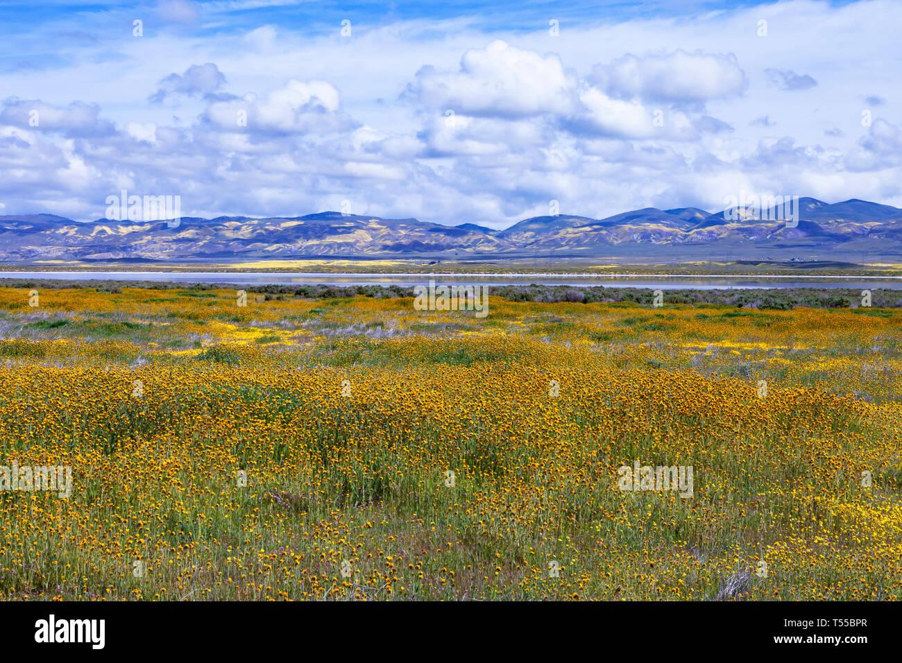 Wildflowers bloom surrounding Soda Lake in California's Carrizo National Monument - Stock Image