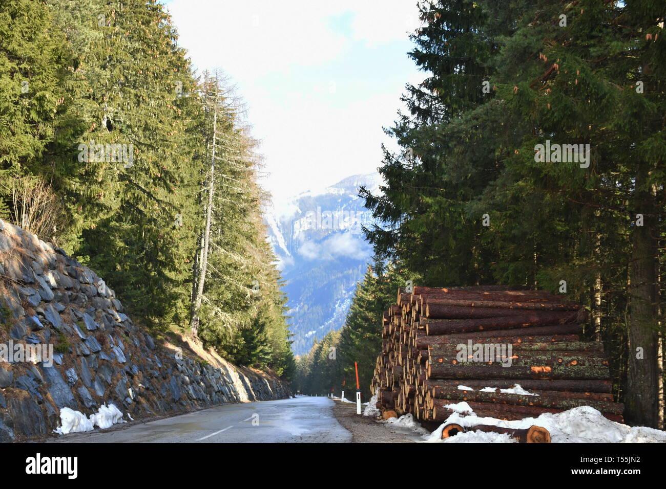 Pustertaler Höhenstraße, Winter, Wald, Holz, Hozstoß, geschlägert, Baum, Wald, Straße, Bergstraße, Lienz, Leisach, Osttirol, Lienzer Dolomiten, Tirol, - Stock Image