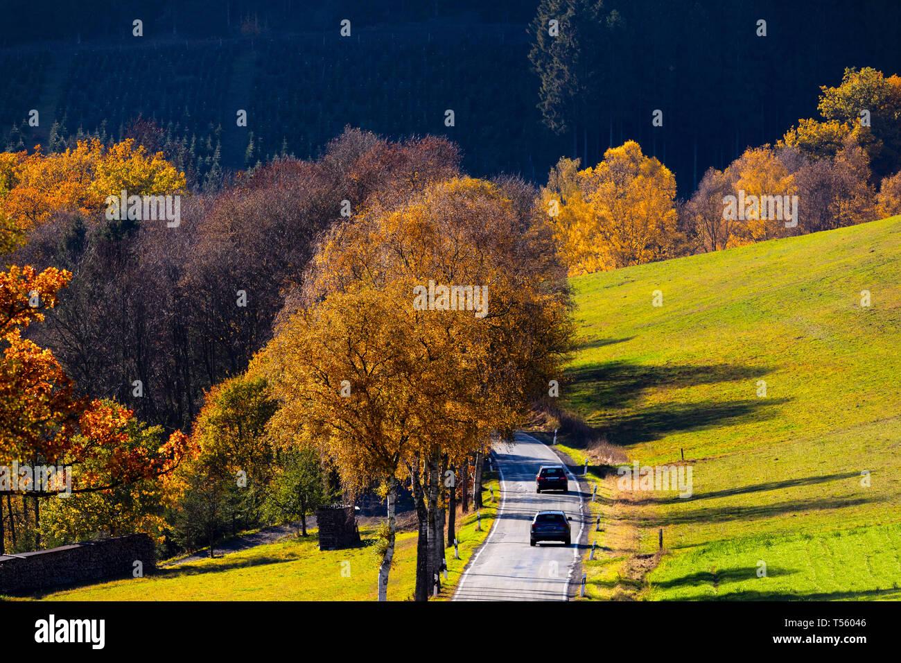 Landstrasse im Sorpetal, bei Obersorpe,  Herbst,  Landschaft, Wald, Sauerland, NRW, Deutschland, Europa. - Stock Image