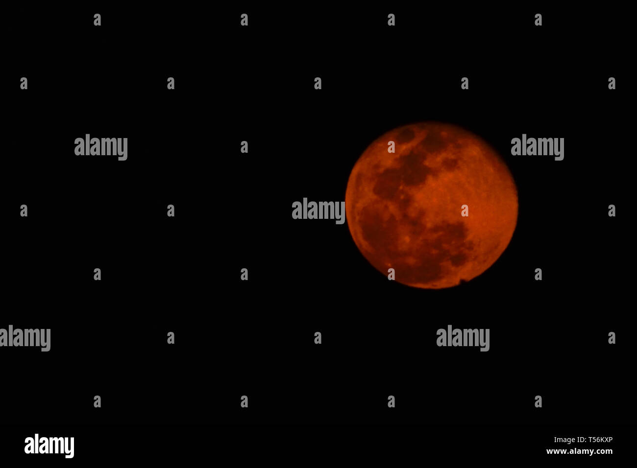Pink moon-View of full moon in April 2019, pink in colour - Stock Image