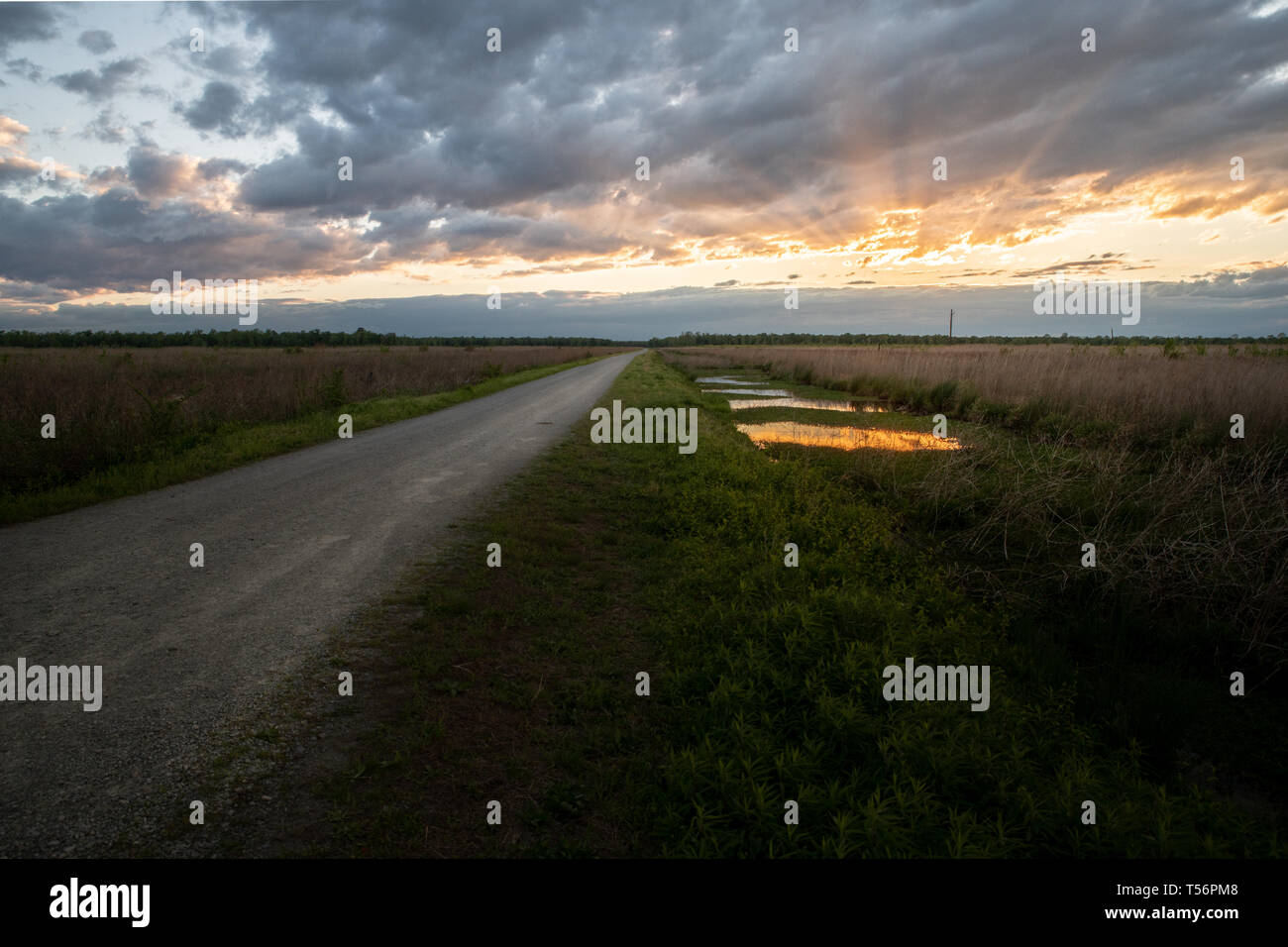A road runs to the horizon in a marsh and swampy wetlands at sunset - Stock Image