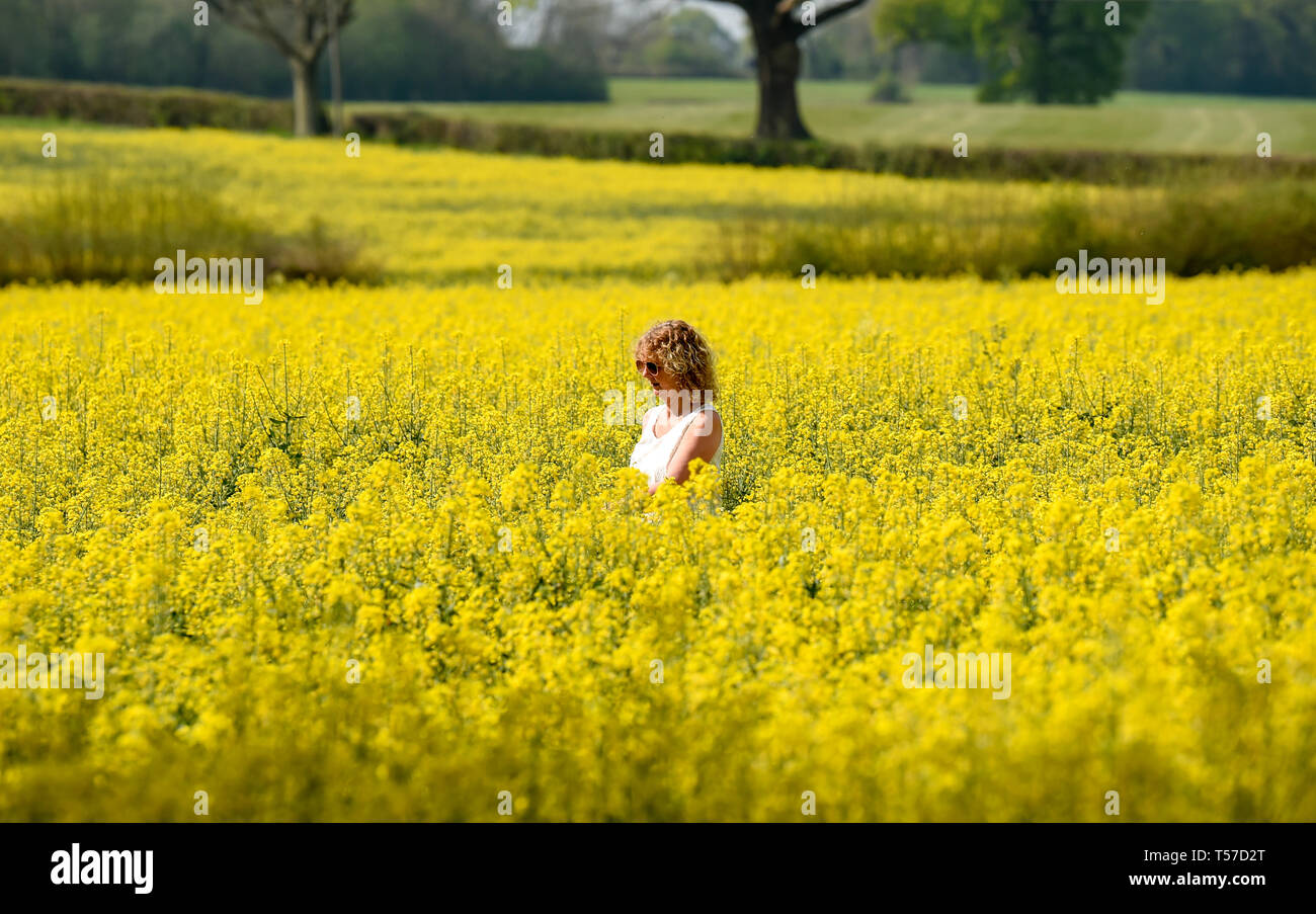 Bolney Sussex, UK. 22nd Apr, 2019. A woman walks through a golden field of oilseed rape as the hot weather continues at Bolney near Haywards Heath just north of Brighton on Easter Monday Credit: Simon Dack/Alamy Live News Stock Photo
